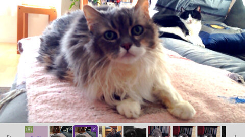 Celebrate National Cat Day with a video on Adobe'sPurrrmiere Clip Catmunity Feed