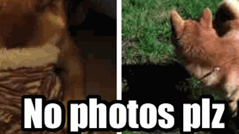You can haz updated Cheezburger iOS app to remix your photos