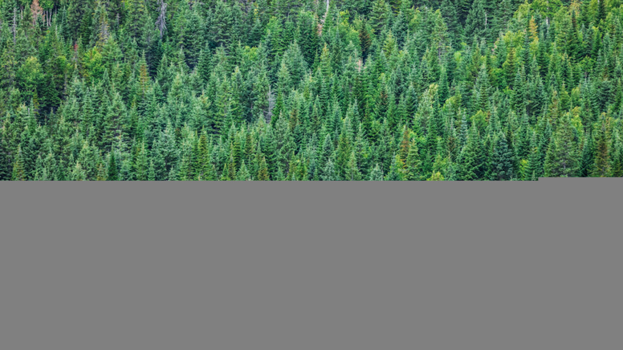 Apple announced a plan to preserve forests and used Medium to do it