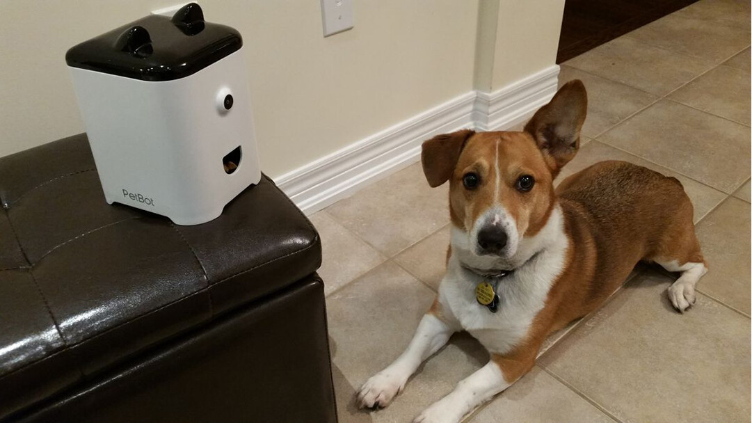 PetBot uses 'petificial intelligence' to let your cat or dog send you selfies