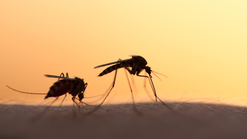 Alphabet/Google isn't evil but genetically modifying mosquitos might be