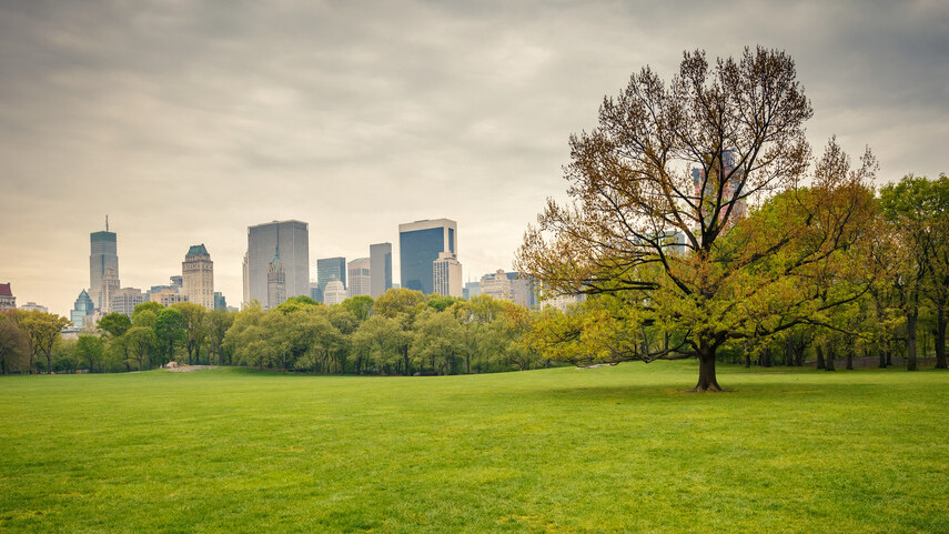 NYC politician wants to give trees email addresses because yeah, why not