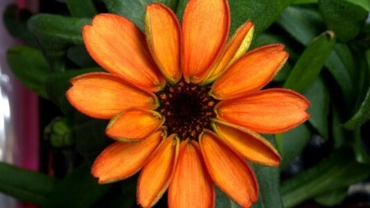 Behold the first flower grown in space