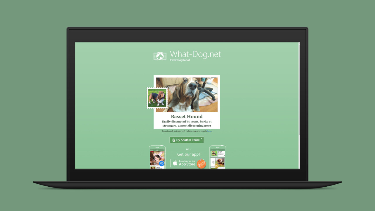 Microsoft's new app can identify dog breeds from photos