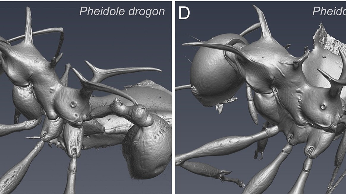 Scary new ant species named after equally terrifying Game of Thrones dragons