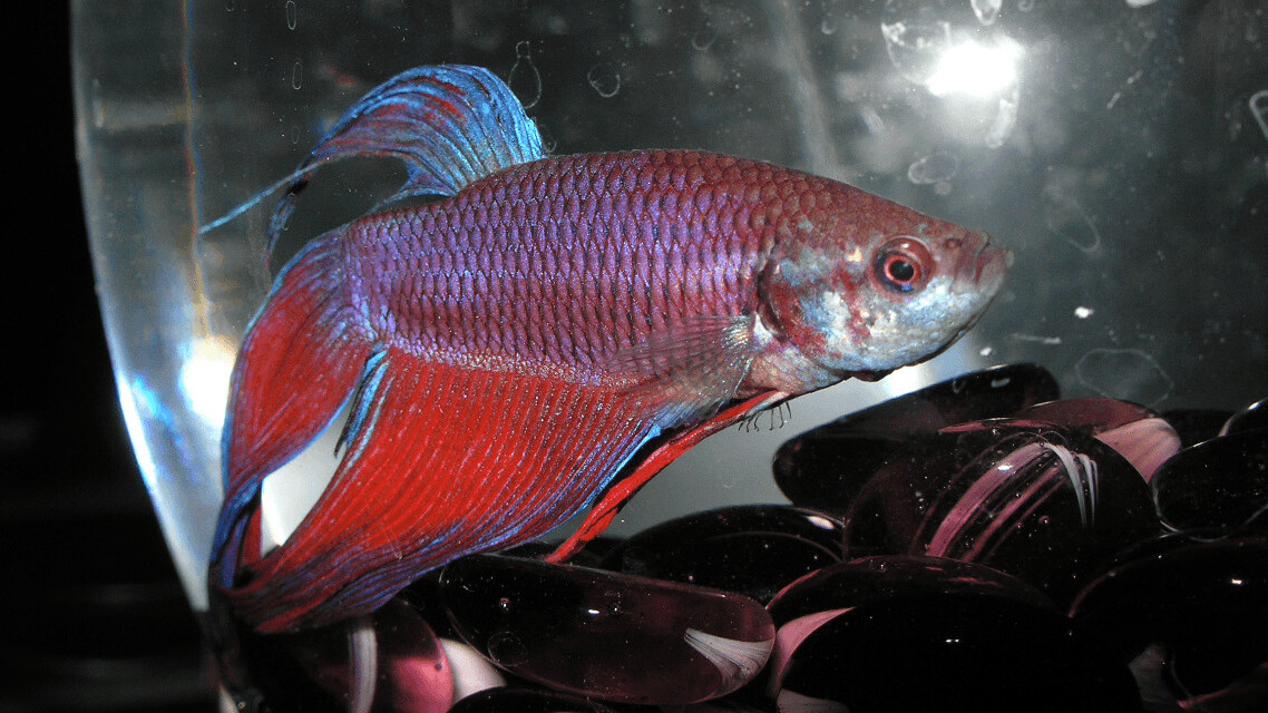 1-star Yelp review for overfeeding pet fish leads to $1M lawsuit