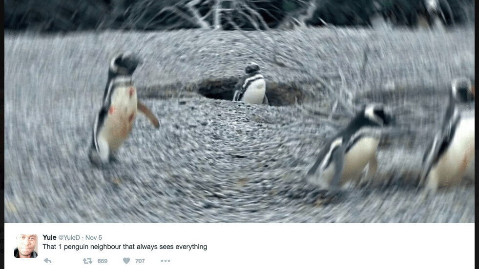 Twitter goes nuts for the penguin love triangle video riddled with passion and infidelity