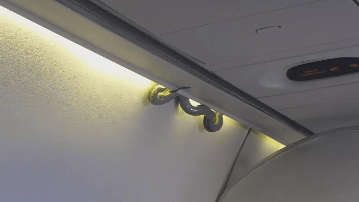 'Snake on a Plane' wreaks havoc as nobody knows how it got on board