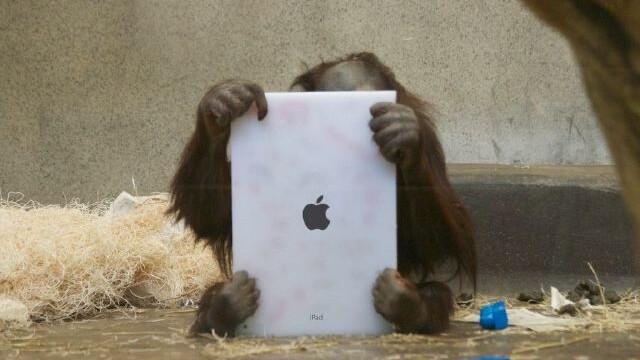 Dutch researchers tapped Tinder to find an orangutan's next mate