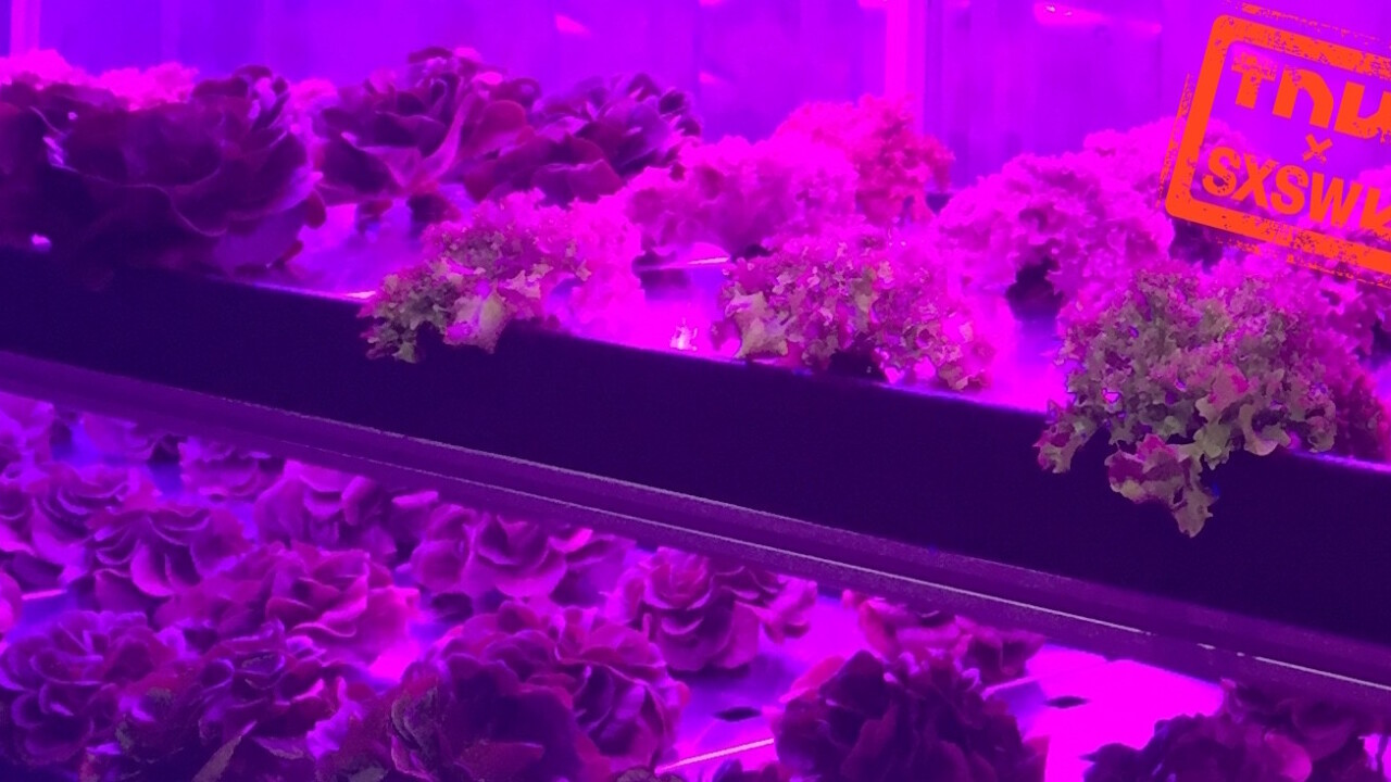 Local Roots brings farmland to SXSW with TerraFarms