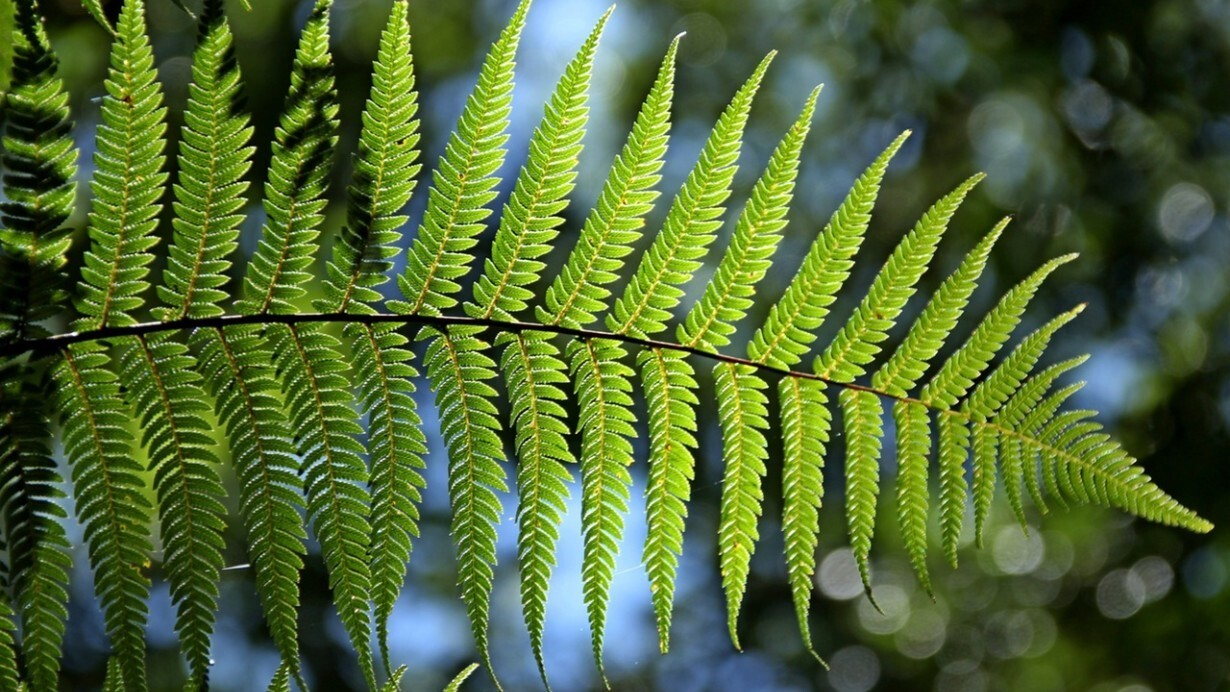 This new plant-inspired tech could be the first step towards self-powered smartphones