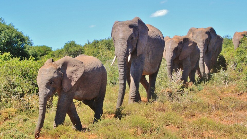 Microsoft co-founder Paul Allen hopes to stop elephant poachers in Afrika using big data
