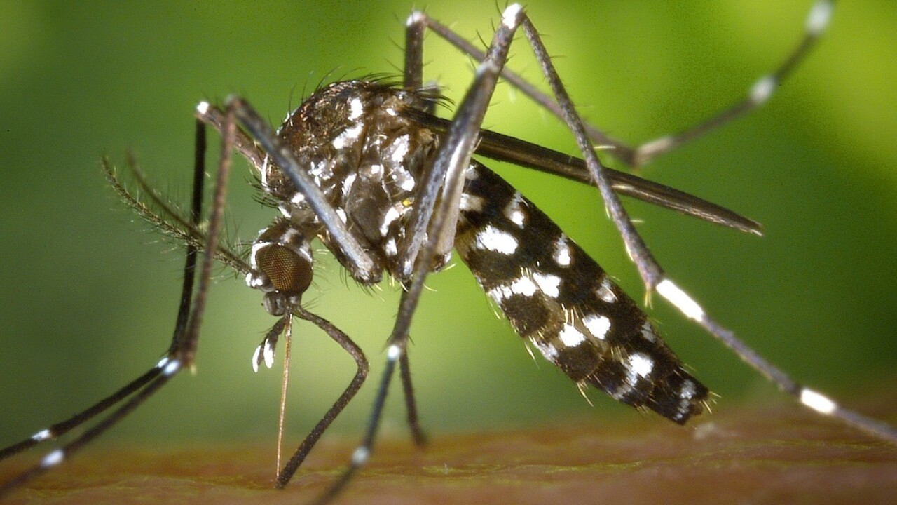 Wearable mosquitos could be the future of diabetes treatment