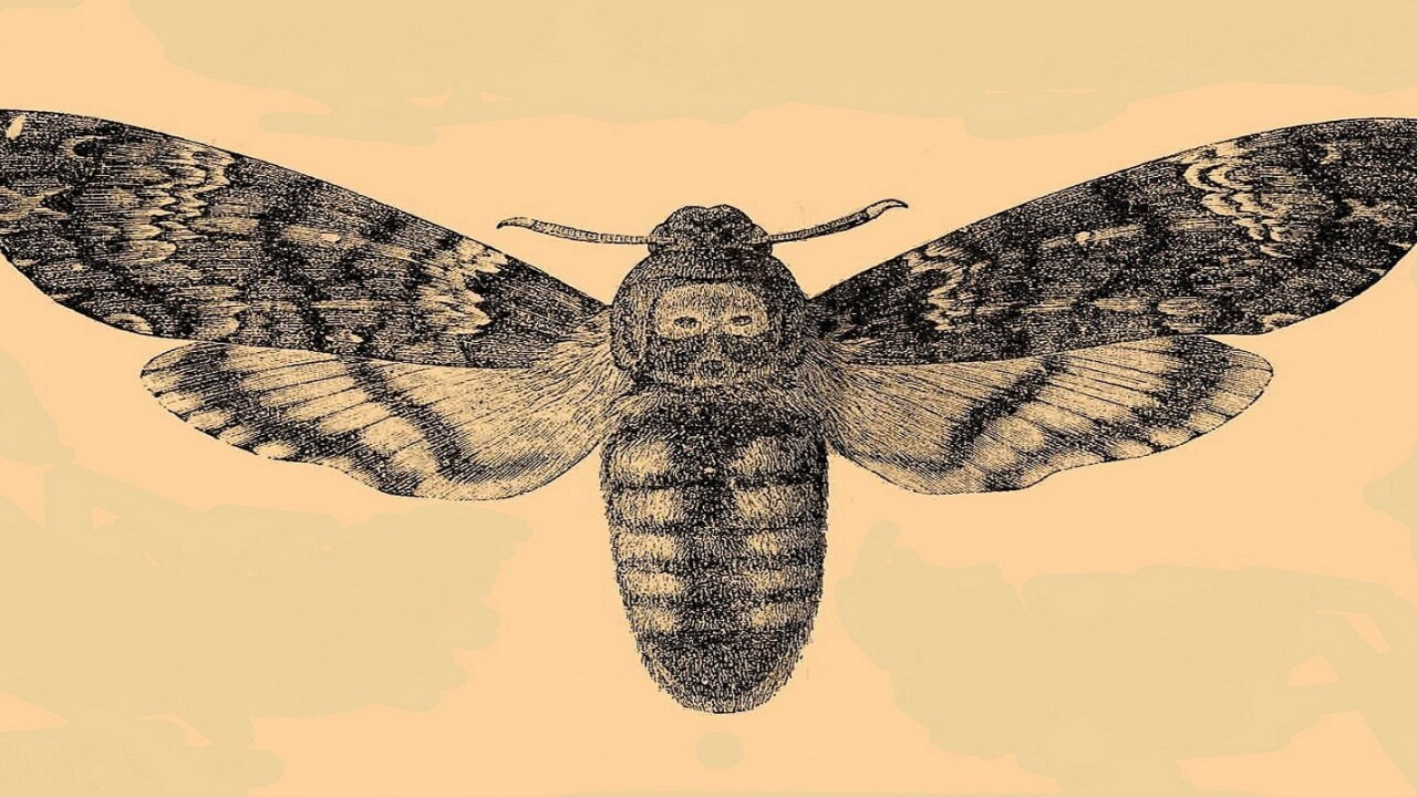 Moths are eliminating screen glare once and for all