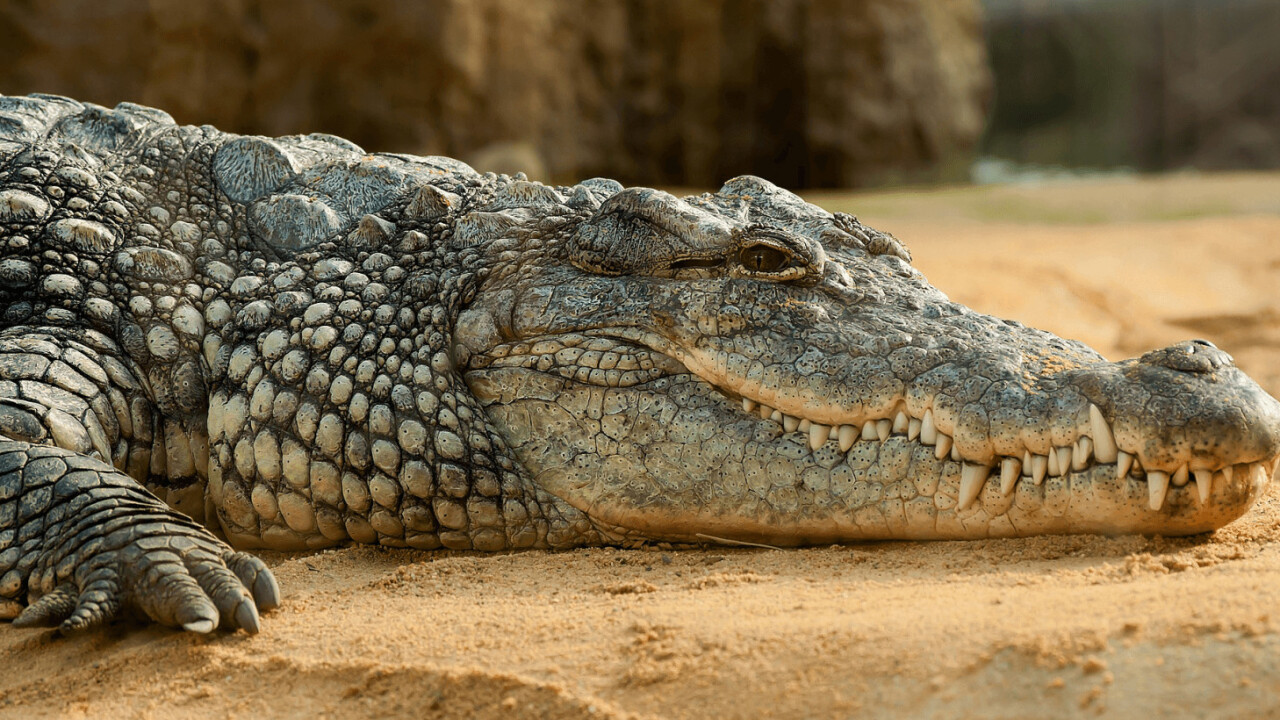 Crocodile snacks on internet-famous terrier after years of torment (Warning: Graphic)