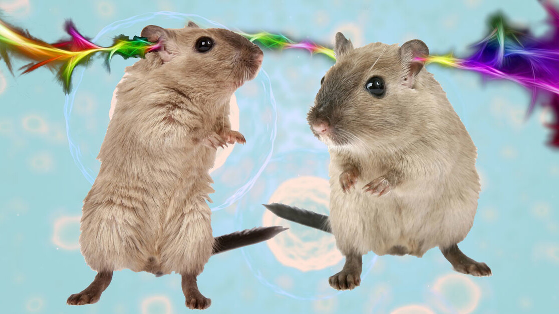 Scientists genetically modified gerbils to hear light through an implant