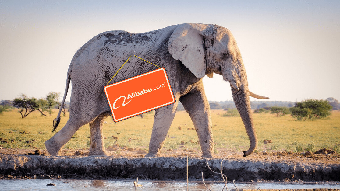 September in Africa: Alibaba saves wildlife and Google Partners comes to Nigeria