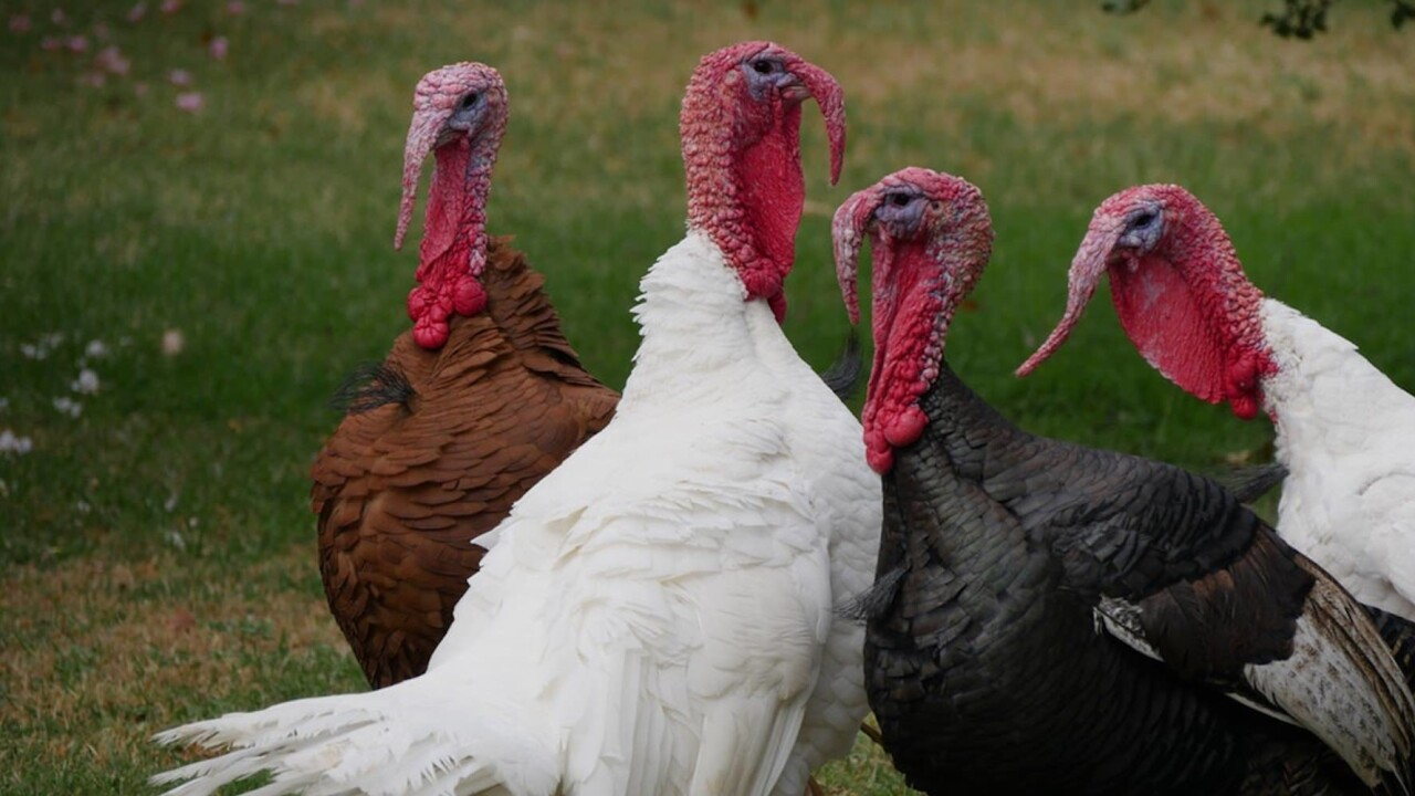Want to learn something while avoiding family this Thanksgiving? Here are 6 ideas.