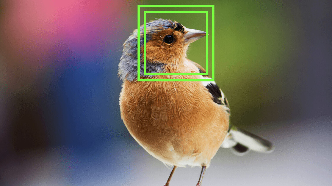 This scientist used facial recognition technology on birds