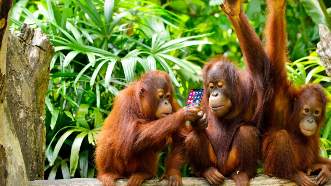Scientists say orangutans can 'talk' about the past JUST LIKE US