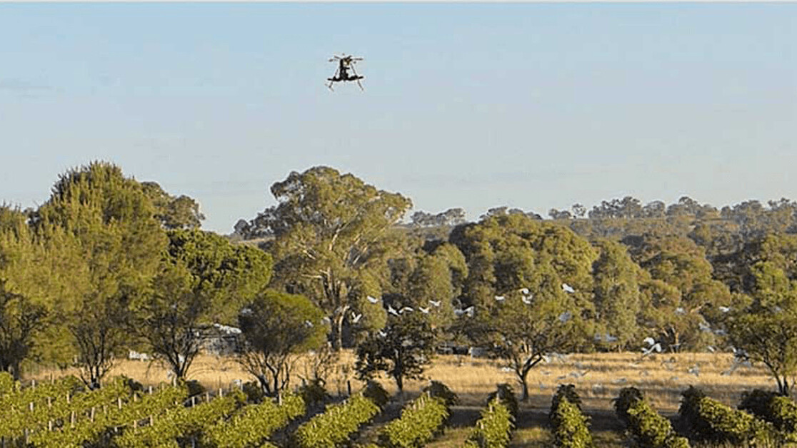 Scarecrow drones keep birds away from crops without causing them harm