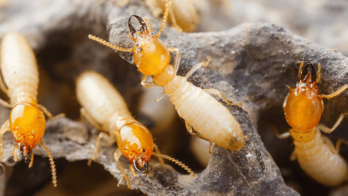 Studying social animals will unlock the potential of swarm robotics