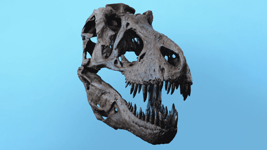 Dinosaurs are dead, but there's still life inside their bones