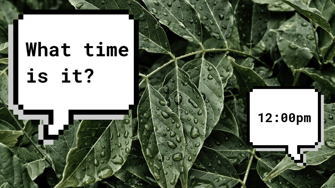 Plant cells signal between each other to agree on what time it is