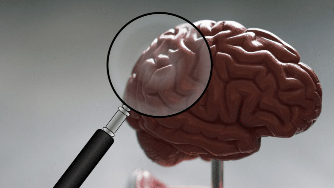 Studying brains can explain why tech affects men and women differently