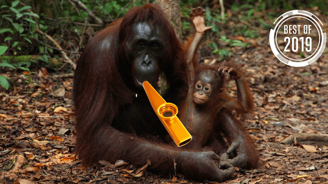[Best of 2019] Orangutans can play the kazoo – here's what this tells us about speech evolution