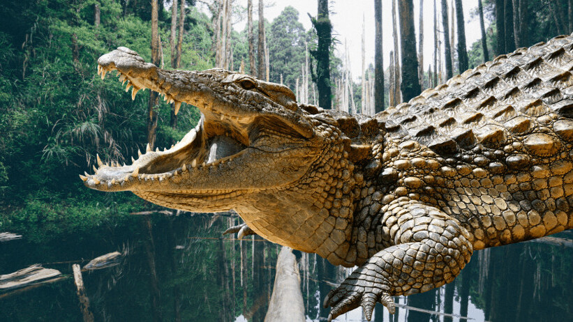 Climate change created today's HUGE crocodiles