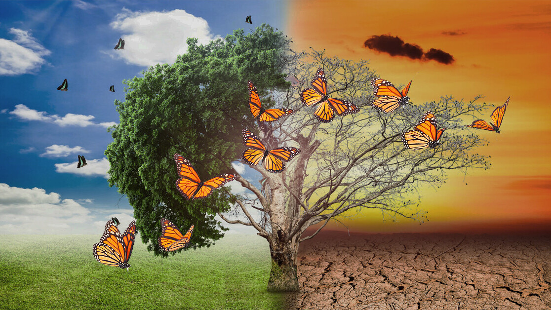 Climate crisis is forcing butterflies to change their lifecycle — but not all can 😞