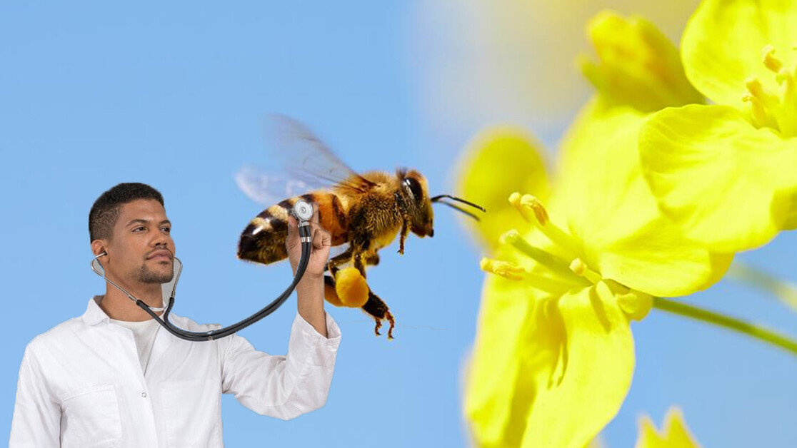 Australian scientists need your help keeping track of exotic bees (please)