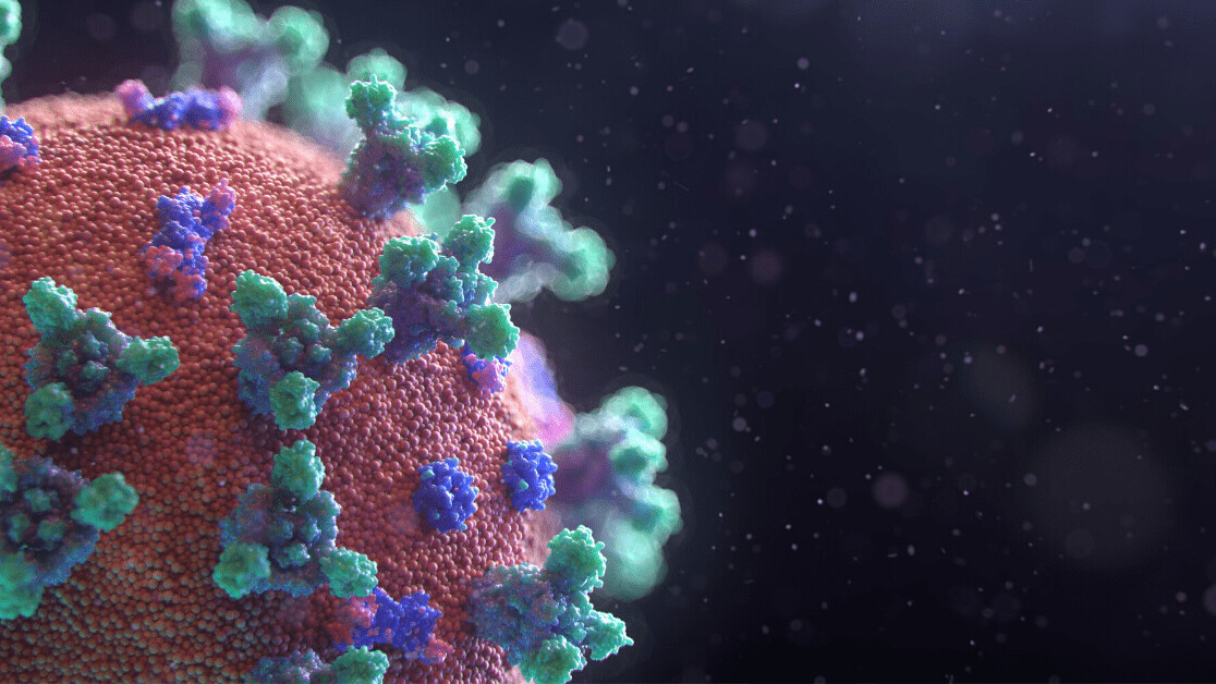 ACE2: The molecule that helps coronavirus invade your cells
