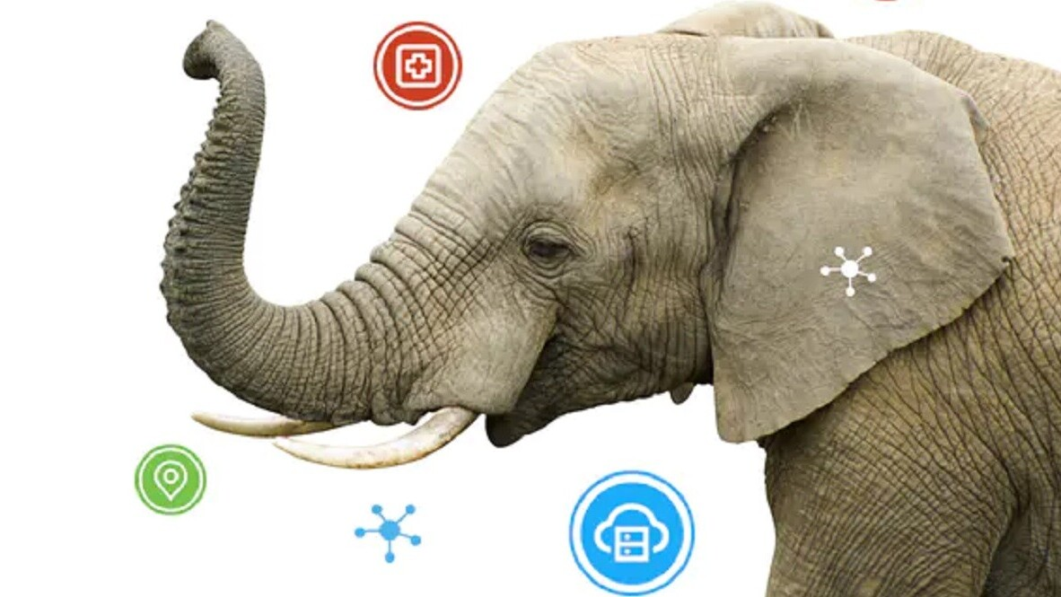 How AI can give endangered elephants a fighting chance