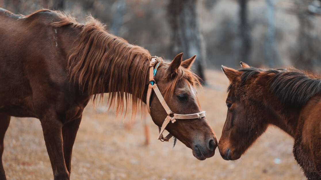 New algorithm suggests horses and camels are susceptible to COVID-19