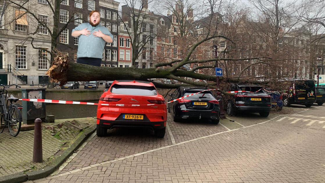 Amsterdam tree versus Jaguar i-Pace: Jag wins