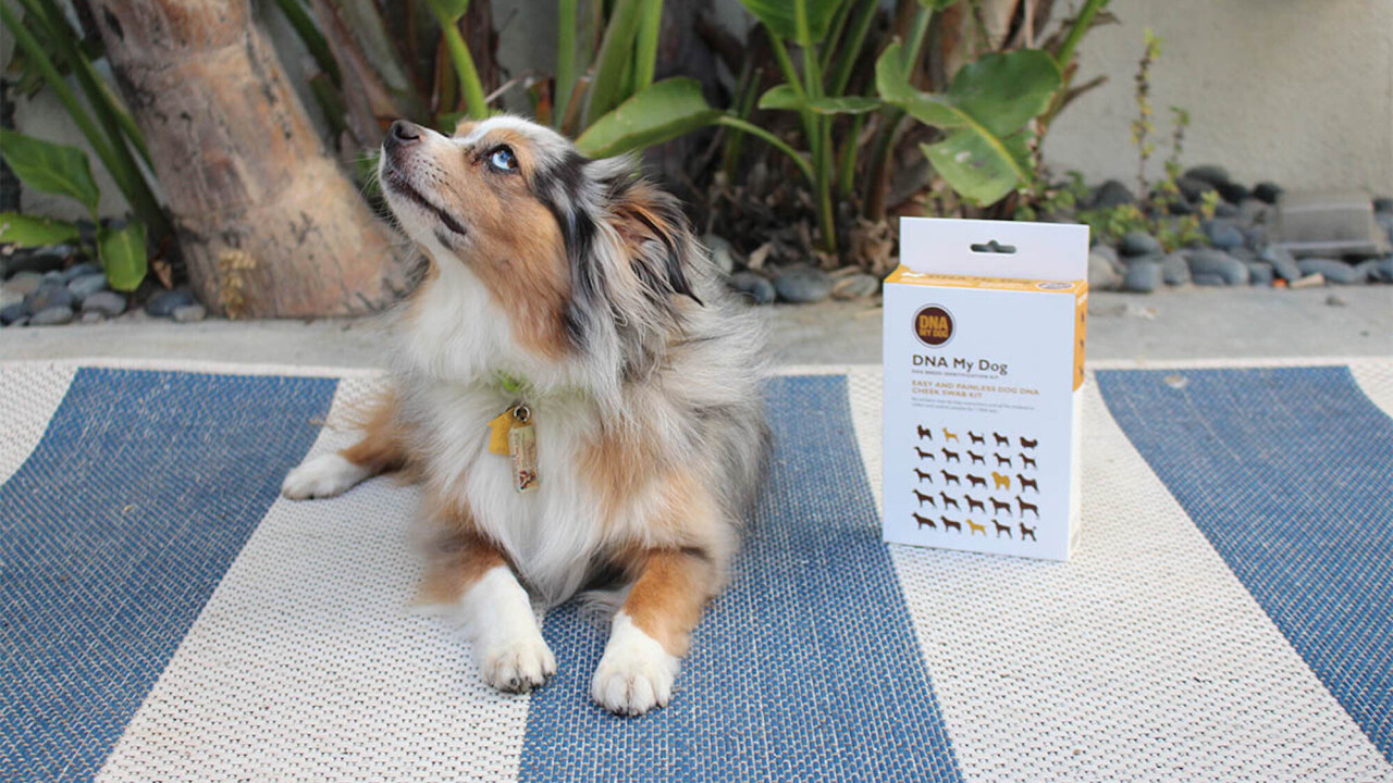 DNA My Dog gives you the full 411 on your canine's genetic makeup