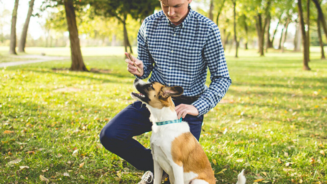 This DNA My Dog testing plus dog training courses can help build a happy, healthy pooch