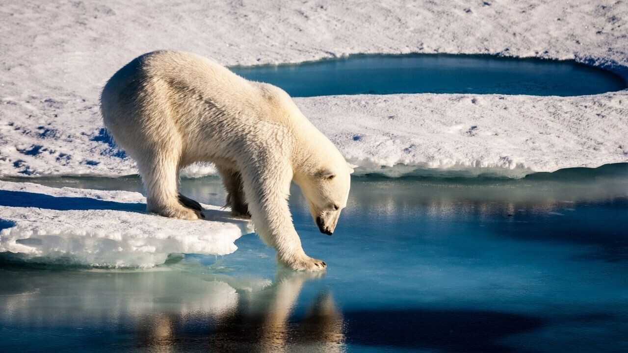 AI tool predicts Arctic sea ice loss caused by climate change