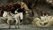 Crossing the line between fantasy and reality in Dave McKean's 'Luna' Featured Image