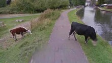 Google takes the issue of bovine privacy very seriously