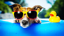 This startup is quite literally Airbnb for pets Featured Image