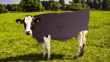 We calculated how many cows HP will murder to make its new leather laptop