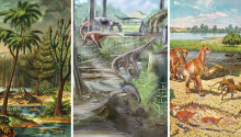 Humans have completely destabilized land animal diversity