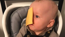 People are slapping their babies with cheese because internet