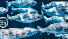 [Best of 2019] Slimy fish mucus can help chemists develop new antibiotics — here's how
