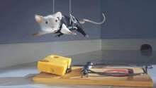 NYU researchers made mice smarter by manipulating their brainwaves with light