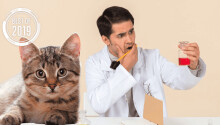 [Best of 2019] Billions are infected by a cat poop brain bug, but studying it is vexing researchers