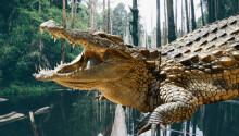 Climate change created today's HUGE crocodiles